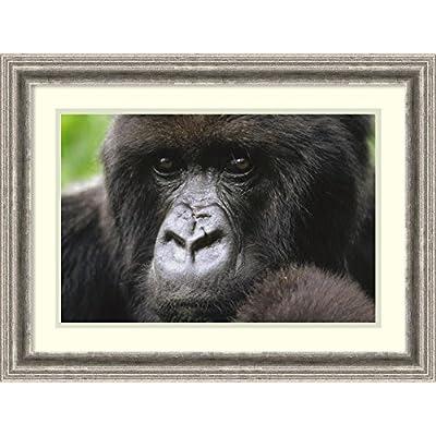 マウンテンゴリラ肖像メス、Virunga山、ルワンダ' Framedアートプリントby Gerry Ellis Size: 24 x 18 (Approx), Matted ブラック 3739560