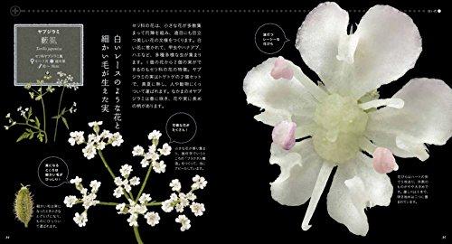 山と渓谷社『美しき小さな雑草の花図鑑史上最高に美しい雑草の花図鑑。雑草はこんなにも美しい!』