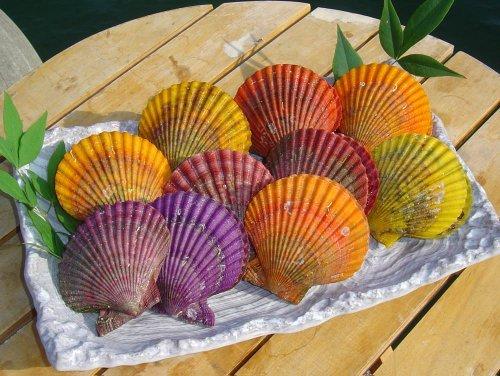 緋扇貝 (ひおうぎ貝) 殻つき 1kg