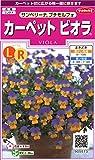 サカタのタネ 実咲花5573 カーペットビオラ サンベリーナ プチモルフォ 00905573