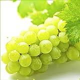 山形県産 ブドウ ナイアガラ 約2.0kg(ご家庭用/3房-10房)