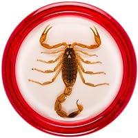 Razor Pocket Pros Yo-Yo Stinger Blonde Scorpion/Red Shell [並行輸入品]