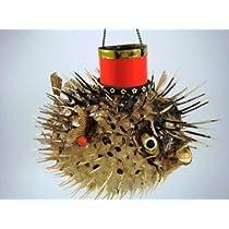 【ふぐちょうちん】 ハリセンボン (福ちょうちん) 沖縄産 天然フグ / お楽しみグッズ(紙風船)付きセット