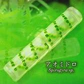 不思議生物大百科 極小の共存者 微生物 【3.アオミドロ】(単品)