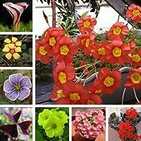 ミックス:300個/バッグオキザキVersicolor花の種盆栽の種、ホームガーデン用世界の珍しい花