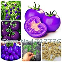 Aパック100のパープルチェリートマトバルコニー果物野菜鉢植え盆栽鉢植えトマト:1