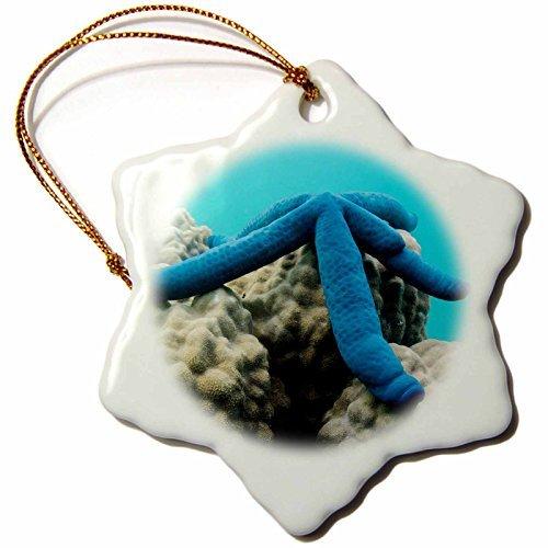 Angel Ornaments Danita Delimont–Sea Stars–Blue Sea Star On Coral Reef、フィジー。–CMスノーフレーク磁器飾り