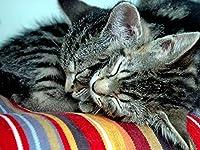 芸術はポスターを印刷します - 猫のカップルの優しさ - キャンバスの 写真 ポスター 印刷 (80cmx60cm)