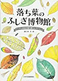 落ち葉のふしぎ博物館―ゲッチョ先生の落ち葉コレクション
