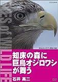 知床の森に巨鳥オジロワシが舞う/石井英二 [DVD]