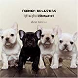 French Bulldogs (Lightweights Littermates) 画像
