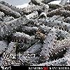 メキシコ産 北海道加工 乾燥ナマコ 中国高級食材 海参 約1kg 箱詰