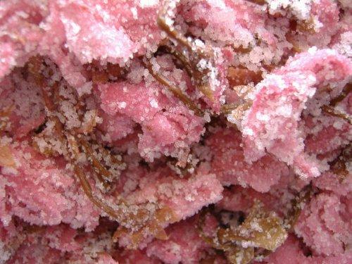 国産八重桜使用 極上桜の花 塩漬 500g ポスト便