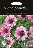 種子パッケージ:ジョンソン世界Botanicss -Miss Wilmott - 100個の種子