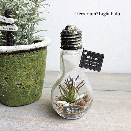 テラリウム チランジア 電球ボトル 造花 多肉植物 ジャーテラリウム ジャーテラ