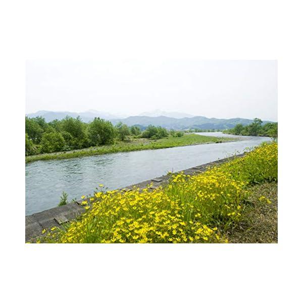 【精米】魚沼産 白米 コシヒカリ 5kg 平成...の紹介画像2