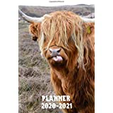 Planner 2020-2021: Two Year Daily Weekly Monthly Calendar Planner Agenda W/ Inspirational Scottish Highland Cow