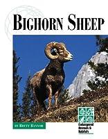 Bighorn Sheep (Endangered Animals and Habitats)