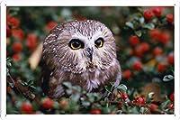 フクロウの花の枝には、大きな目16603ハンティングのティンサイン 金属看板 ポスター / Tin Sign Metal Poster of Owl Flowers Branches Hunting Big Eyes 16603