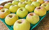 長野県産 生産農家直送りんご 「名月」 自家用ランク 10~20玉 約5kg入り/箱