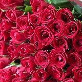 [ビズフラワー]【花束 バラ100本】レッド 薔薇 お祝い 誕生日 記念日 大切な日 BisesFlower