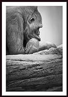 Printfinders Gorilla Resting Artwork by Darrenグリーンウッド