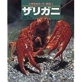 ザリガニ (いきものスーパー百科)