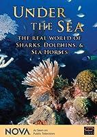 Nova: Under the Sea - Real World of Sharks Dolphin [DVD] [Import]
