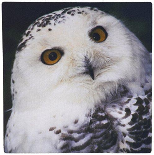 3drose LLC 8?x 8?x 0.25?Snowy Owl Micheleウェストモーランドマウスパッド( MP _ 84116?_ 1?)
