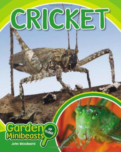 Cricket (Garden Minibeasts Up Close)