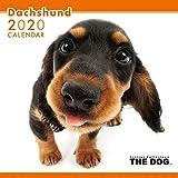 アーリスト 2020 THE DOG カレンダー ダックスフンド