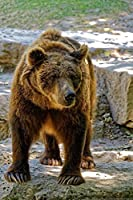 Brown Bear Wild Animal Journal
