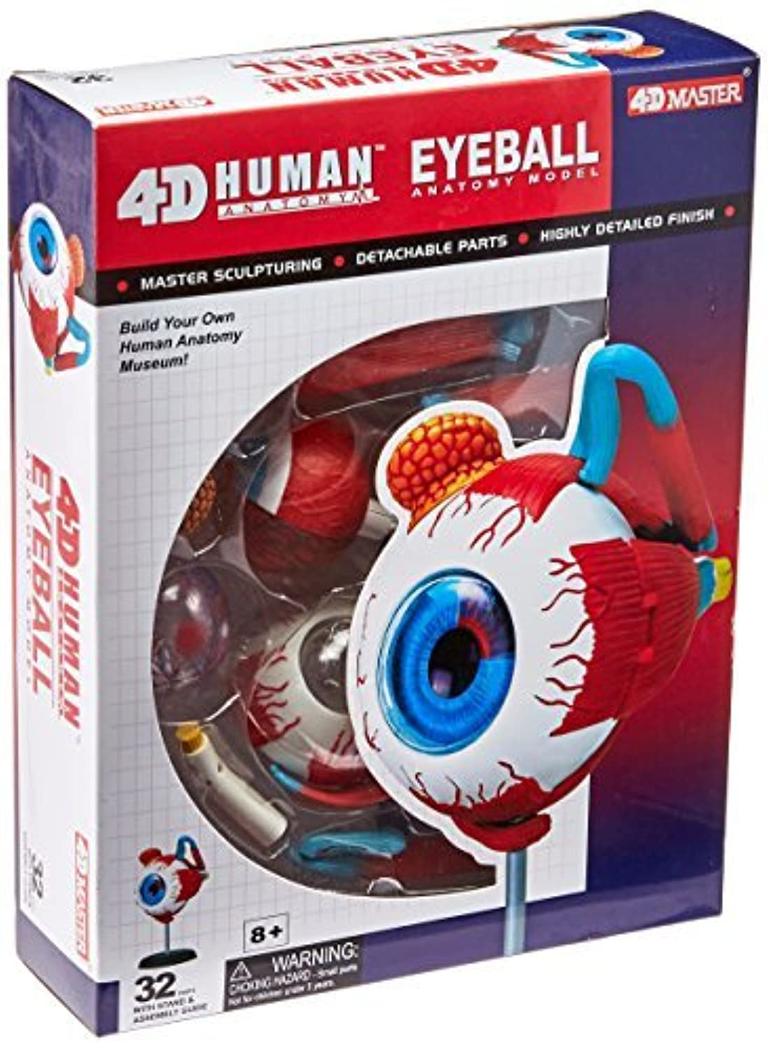 Tedco Human Anatomy - Eyeball Anatomy Model by TEDCO