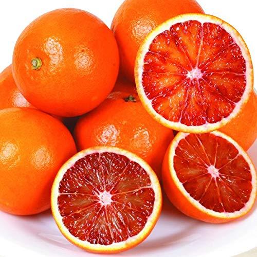 国華園 和歌山産 タロッコ オレンジ 5kg1箱 みかん