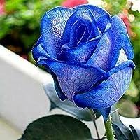 スワングリーン15:150PCSローズフラワーシードオランダローズシードラバーギフトレインボーレアエキゾチック25色家庭植物のDIYを選択する15