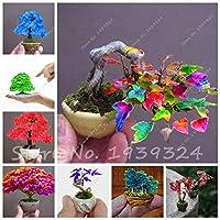 混合:10ピースメープルツリー種子盆栽植物日本花種子Plantasパラジャルディンガーデン装飾