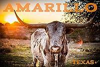Amarillo、テキサス–Longhornとサンセット 16 x 24 Giclee Print LANT-72543-16x24