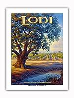 ロディ・ワイナリー - バレーオーク(Quercus lobata) - セントラルヴァレーAVAブドウ園 - カリフォルニアワインカントリーアート によって作成された カーン・エリクソン - プレミアム290gsmジークレーアートプリント - 30.5cm x 41cm