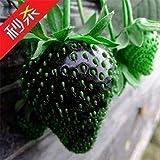 100xのレア黒イチゴ種子栄養価の高いおいしい果物野菜工場オーガニック家宝新鮮な種子