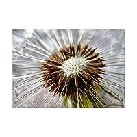Nature Plant Macro Dandelion Seeds Stamen Wall Art Print 自然工場マクロ壁