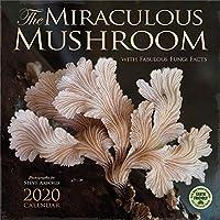 The Miraculous Mushroom 2020 Wall Calendar: With Fabulous Fungi Facts