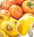 国華園 和歌山の柿 ご家庭用 早秋 新秋 太秋 4kg (太秋)