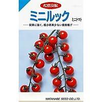 ミニトマト 種 【 ミニルック 】 種子 小袋(約ミニルック29粒)