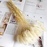 BRXY 50PCS Home Decoration Lagurus Ovatus Rabbit Tail Dried Flowers, Real Flower, Eternal Flower Dried Grass Flower Bouquet P