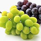 果物 ギフト シャインマスカット & ナガノパープル 種なし 皮ごと 食べ比べぶどう セット