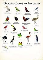 アイルランドの鳥の鳥 Garden birds of Ireland silk fabric poster シルクファブリックポスター 80cm x 60cm