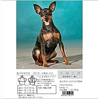 犬服工房 振袖着物(一重) ecoタイプ 超大きなミニピン PXXL&P3XL&P4XL