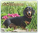 For the Love of Dachshunds 2020 Calendar: Foil Stamped Cover