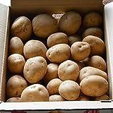 新じゃがいも 5kg 出島 特別栽培 長崎産