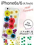 【iPhone6/6s】ガーベラ ドライフラワークリアケース 天然押し花使用 着脱ラクラク TPU ハンドメイド スマホケース 選べる全5色